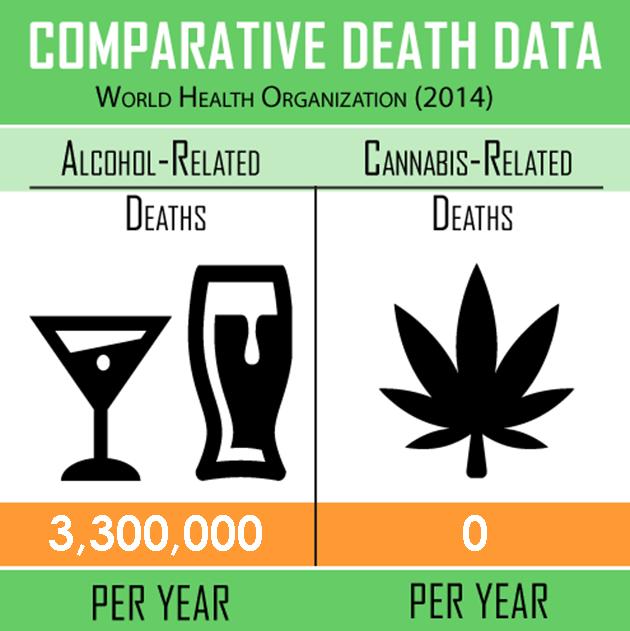 federal study finds marijuana 100x less toxic than alcohol safer